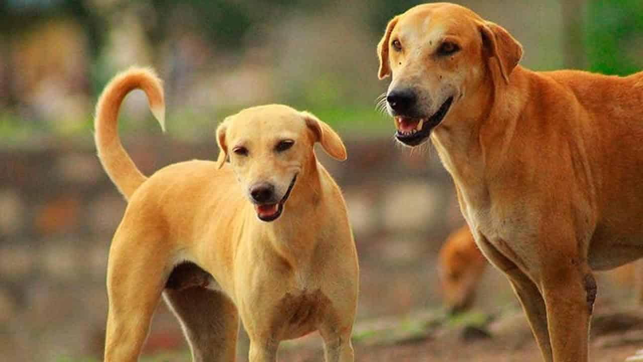 30 03 21 cachorros processo separacao