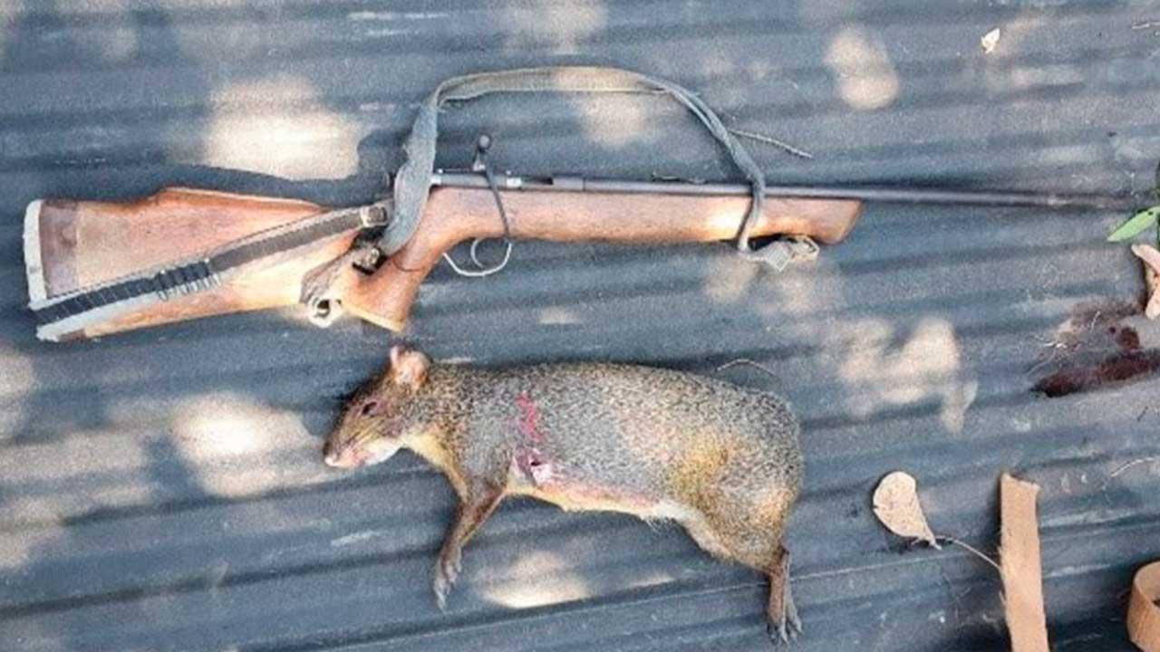 Caçador é preso em flagrante e leva multa de R$5 mil por abate de animal silvestre em João Pinheiro